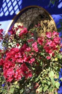 majorelle-garten-jardin